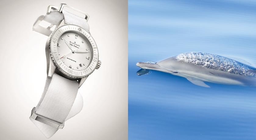 海獅水汪汪大眼超可愛!相機「說故事」拍到超驚豔海底動物