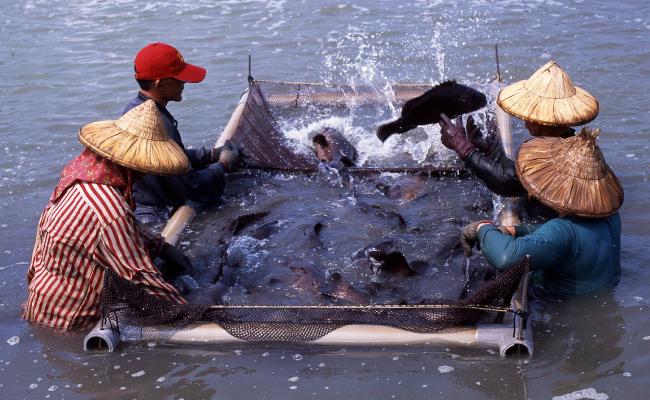 台灣中油冷排水變身為鑽石水