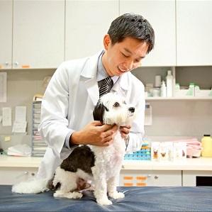 工時長又易醫療糾紛 獸醫靠這個才撐得住