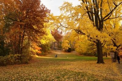 紐約地途》秋天賞楓,就在紐約的公園