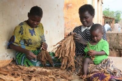 地理眼》二手菸的滋味:馬拉威孩子的菸草童年
