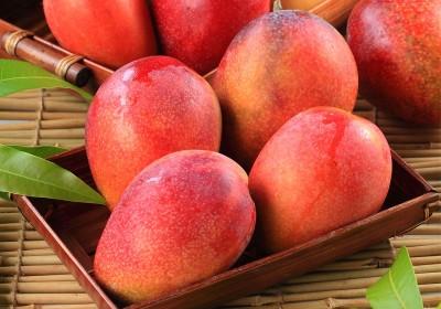 科技農報》水果貯藏技術大突破,植物性奈米配方延長芒果保鮮期
