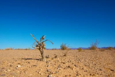 科技農報》世界糧倉大變動?氣候變遷將重新分配全球糧食生產地圖