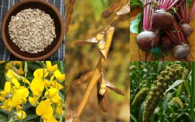 科技農報》雜草立大功,覆蓋作物取代除草劑的秘訣看這裡!