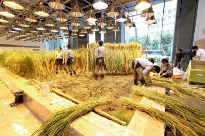 科技農報》福島核災的農業重生之路,從這裡開始,東京都的城市農場!