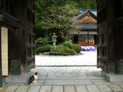 日本自由行》僧侶養貓有礙禪定,卻能激發創意