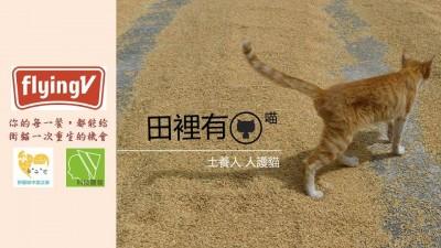 科技農報》田園城市也有循環農業:田裡有喵,貓糞堆肥的創新友善農法