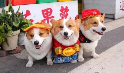故事》狗年好狗運!「狗」字是怎麼來的?