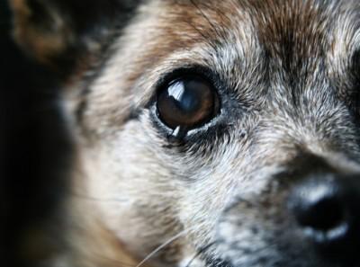 法操》開車撞死狗狗,會構成「肇事逃逸」嗎?