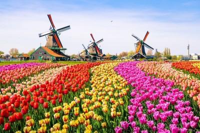 歐洲之心》荷蘭居,大不易:一位台灣荷蘭人妻的觀點