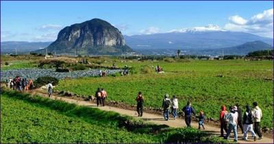 東亞漫遊》濟州行(二):自然遺產、與讓人更能親近自然與人文的偶來小徑