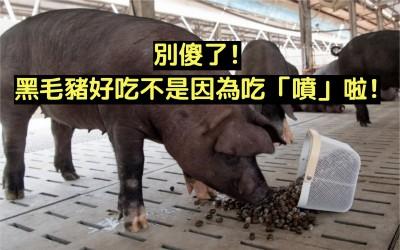 鬼王來鬼扯》別傻了,黑毛豬好吃不是因為噴(ㄆㄨㄣ)