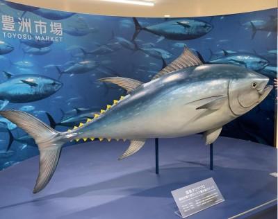 Lin bay 好油》國家高度的批發市場:日本豐洲市場取經(三)