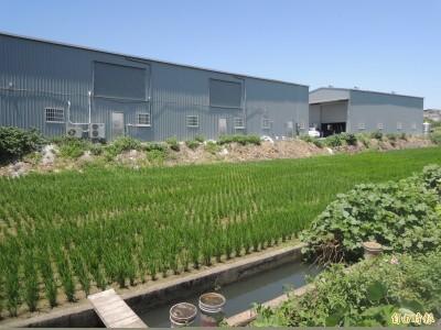 Lin bay好油》《農產品生產及驗證管理法》:快速學習,東缺西漏,口號政策與貌合神離