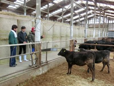 一級嘴砲》和牛出得去,利潤進不來,大家沒發財