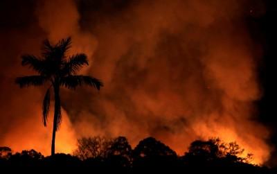 魔幻拉美》亞馬遜雨林大火的元兇