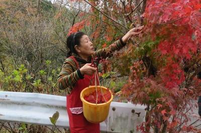 超A評論》日本地方創生政策與德島縣上勝町I-Turn移居者的緣份、時機與運氣