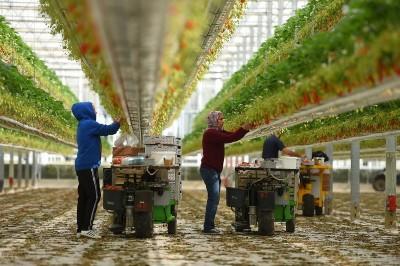 一級嘴砲》多國因肺炎而出現農業勞力短缺