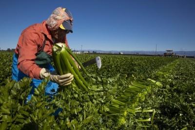 自由開講》後疫情時代的國際農糧生產
