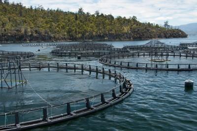 一級嘴砲》丸紅的陸上型養殖鮭魚版圖