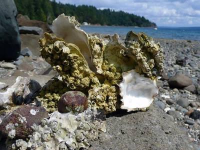 韋恩的食農生活》自業自得?人為汙染了牡蠣恐重回食物鏈!