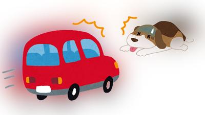 你今天,犯罪了嗎?》「開車撞狗」為什麼不是傷害罪?