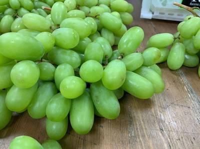 Lin bay 好油》國際間的水果品種競爭:想像與現實,蛋頭與務實