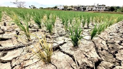 研之有物》過了這次乾旱還有下次!臺灣不容樂觀的水資源困境──專訪許晃雄