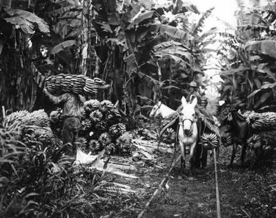 魔幻拉美》【中美洲獨立200週年特輯】文字力量:改拿筆桿的香蕉工人