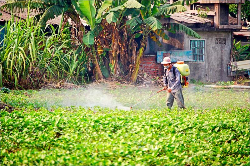 紅豆農在收成前噴灑巴拉刈方便收成。(資料照)