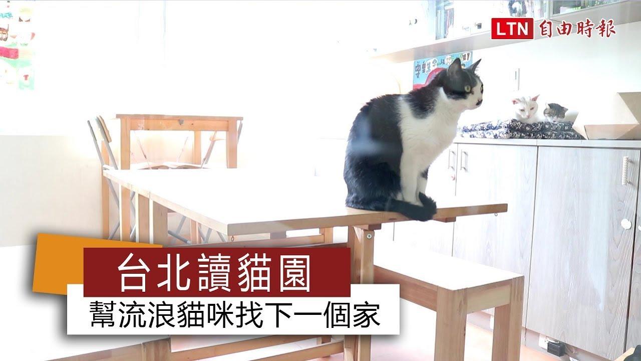 <台北讀貓園 幫流浪貓咪找下一個家