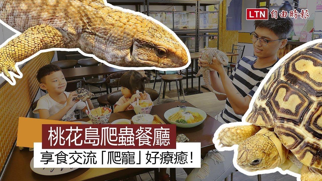 <桃花島爬蟲餐廳  享食交流「爬寵」好療癒!