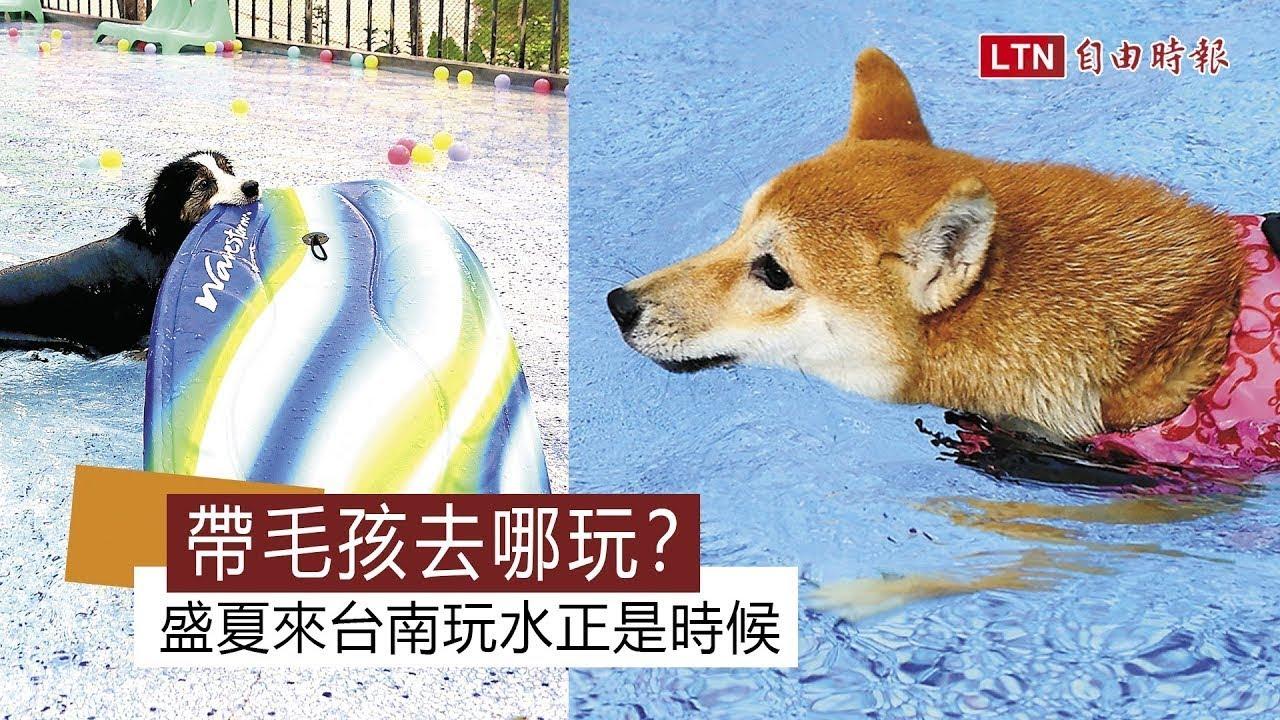 <泳池、草坪通通有!台南這個狗狗樂園讓毛孩不想回家