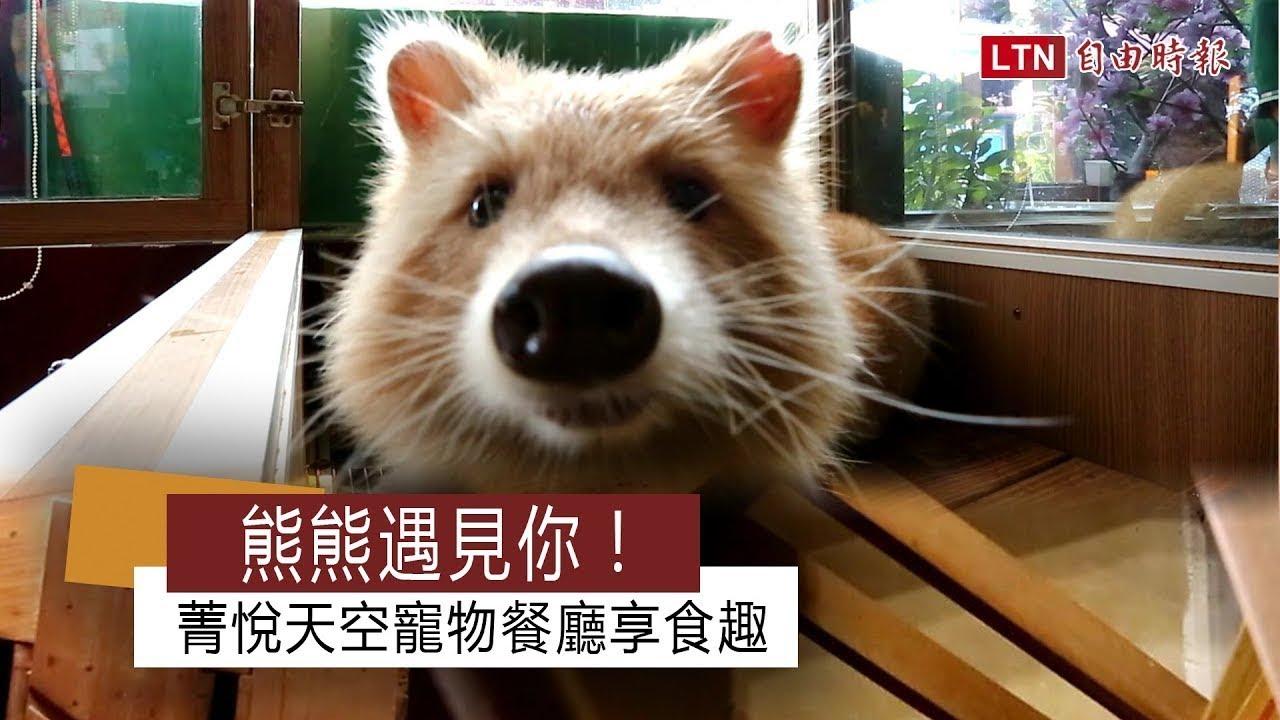 <熊熊遇見你! 菁悅天空寵物餐廳享食趣