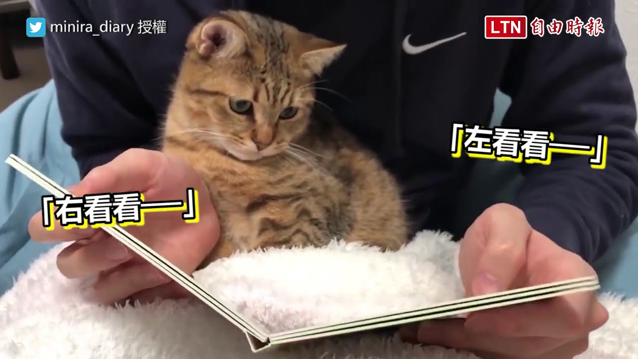 <貓小孩愛看書!打開繪本露出超專注眼神...網友大讚:比我還用功