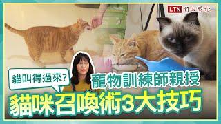 <貓聽得懂名字?寵物訓練師親授「貓咪召喚術」3 技巧讓喵皇主動靠近